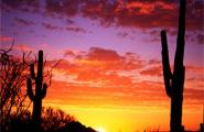 Carefree, AZ Sunset with saguaros and red and yellow clouds