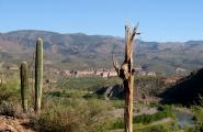 Saguaro Skeleton with a view